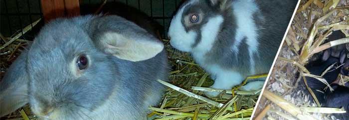 Lali und Timmy