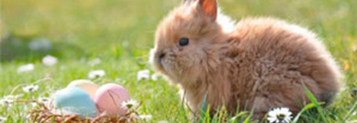 Frohe Ostern und Ankündigungen